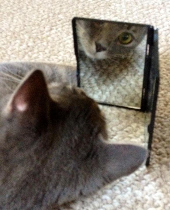 bonnie mirror